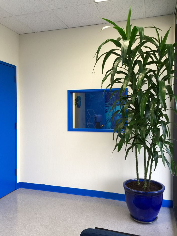 Main door into office section painted Gridtential blue to match branding. Portal window trims into meeting room was painted the same accent color.
